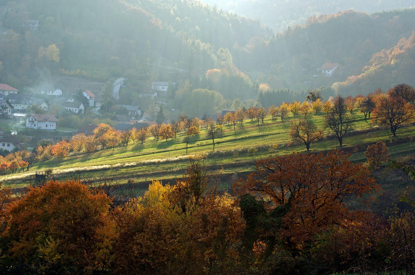 Herbst in Tal bei Forchtenstein
