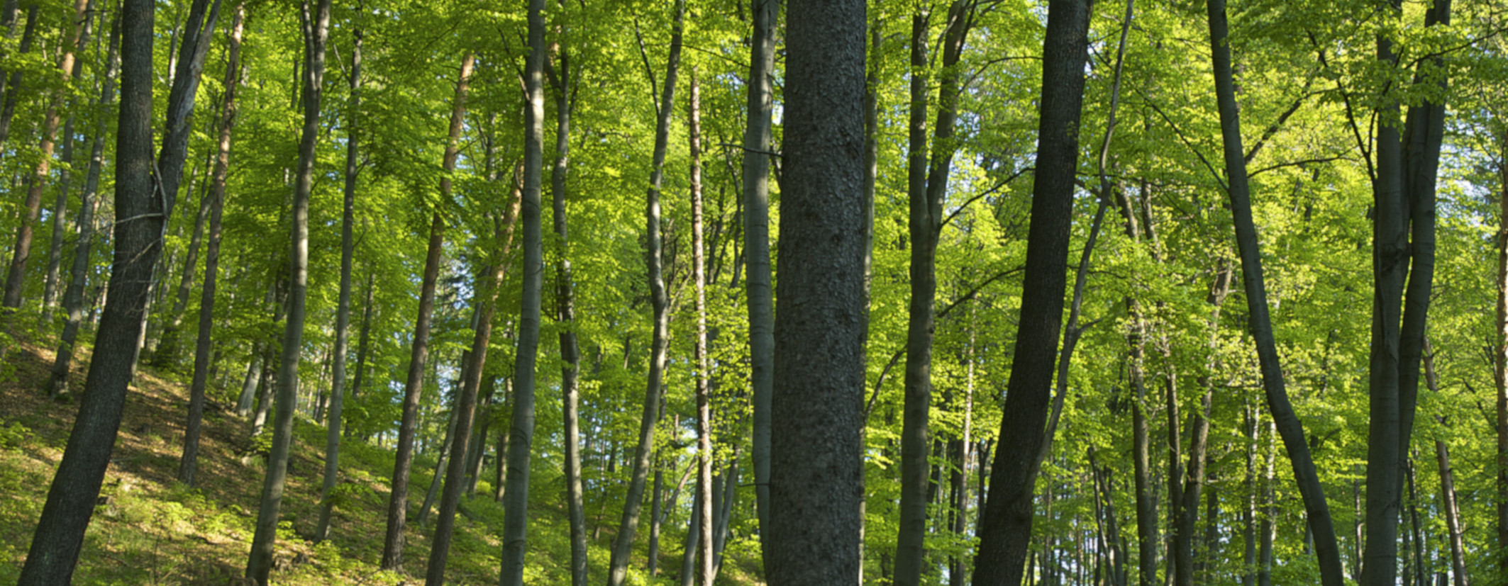 Beitragsbild_Homepage_Waldbaden