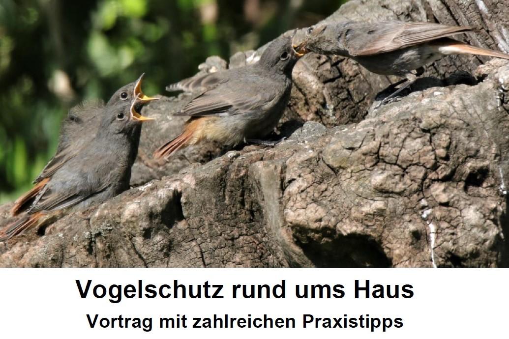 Vogelschutz rund ums Haus // Vortrag mit Praxistipps // 19.09.2021